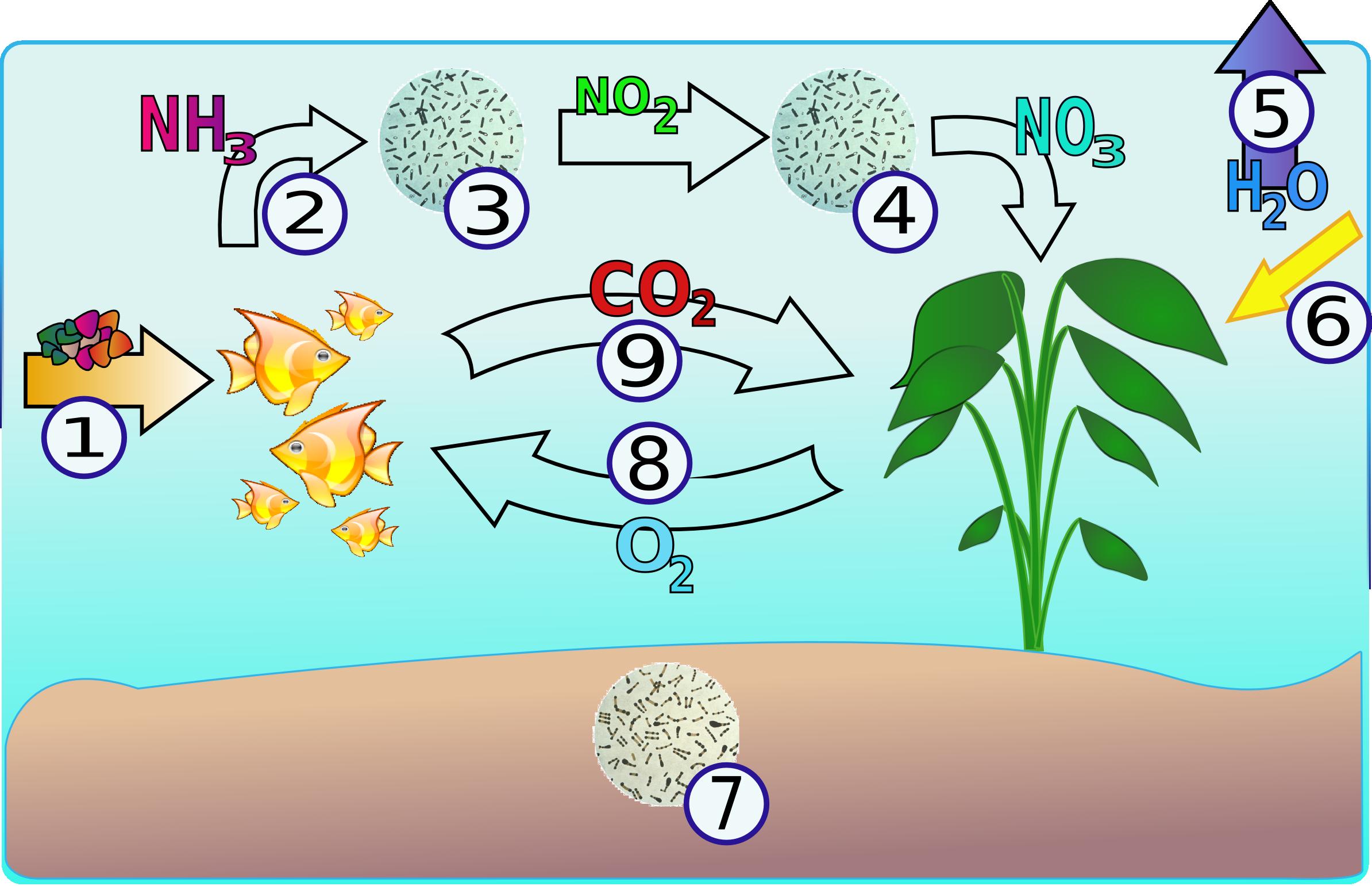 ciclo dell'azoto nel filtro dell'acquario