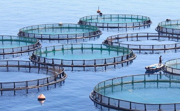 fish-farm-hero