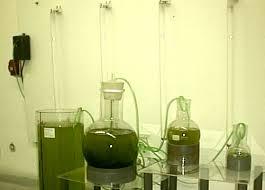 fitoplancton lab