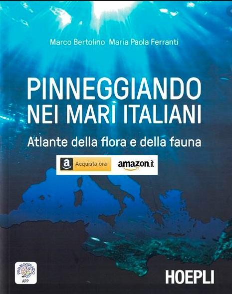 Identificare i pesci mediterranei