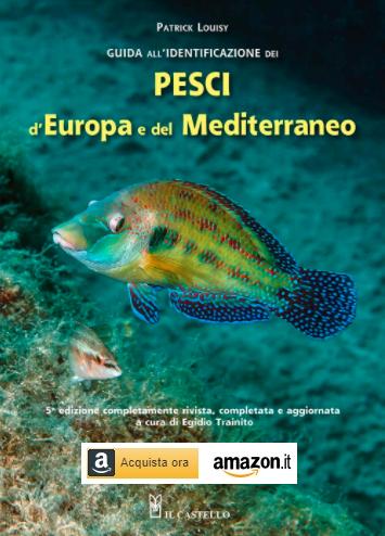 Sciarrano e altri pesci: guida all'identificazione